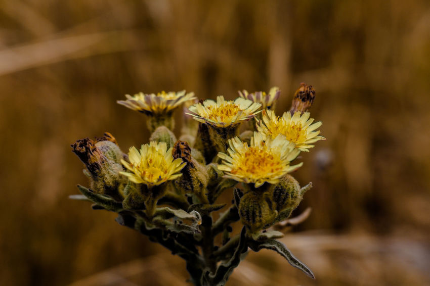 Animal Themes Animal Wildlife Animals In The Wild Beauty In Nature Blooming Close-up Day Flower Flower Head Focus On Foreground Fragility Freshness Growth Insect Nature No People One Animal Outdoors Petal Plant Pollination The Great Outdoors - 2017 EyeEm Awards Yellow