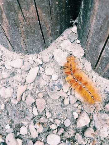 One Animal Animal Themes Insect High Angle View Animals In The Wild Wildlife Outdoors Nature No People Day Close-up Animal Wildlife Beauty In Nature Chenille