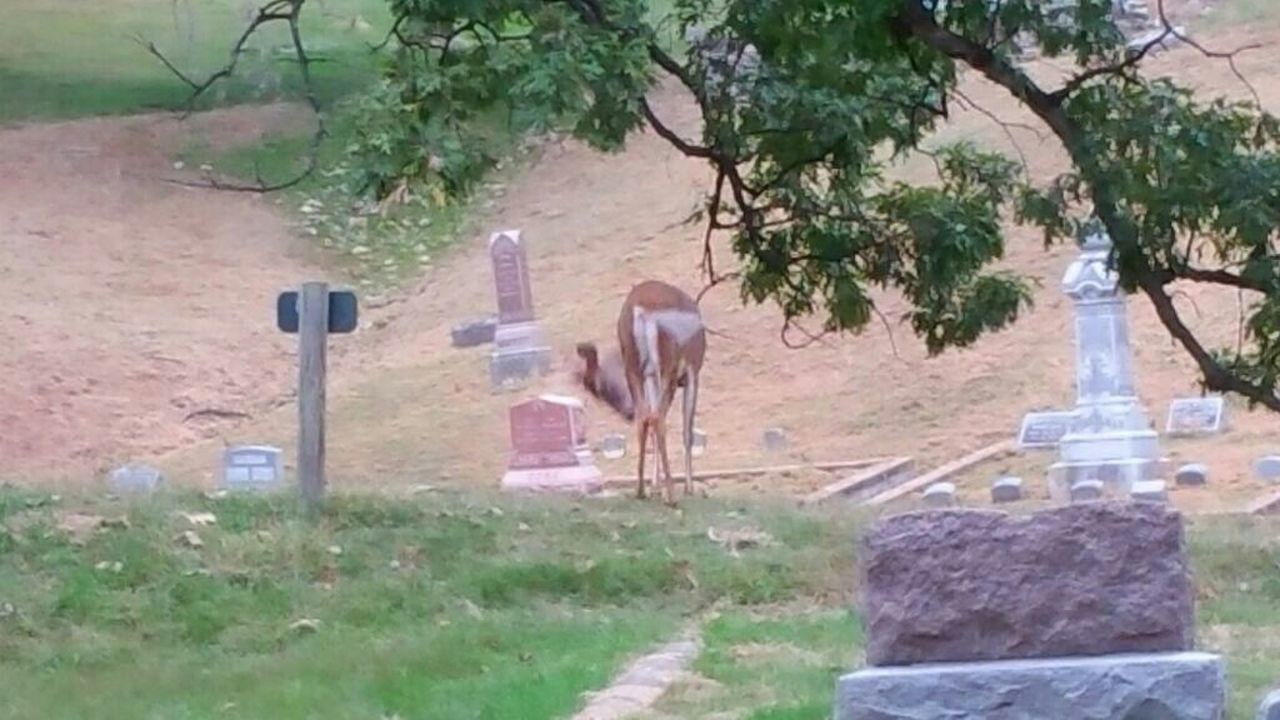 cemetery, no people, day, tree, plant, outdoors, animal themes, grass, field, mammal, one animal, nature, domestic animals, graveyard, landscape, gravestone