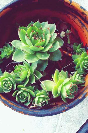 Cactus Plants 🌱 Plants Plantpot