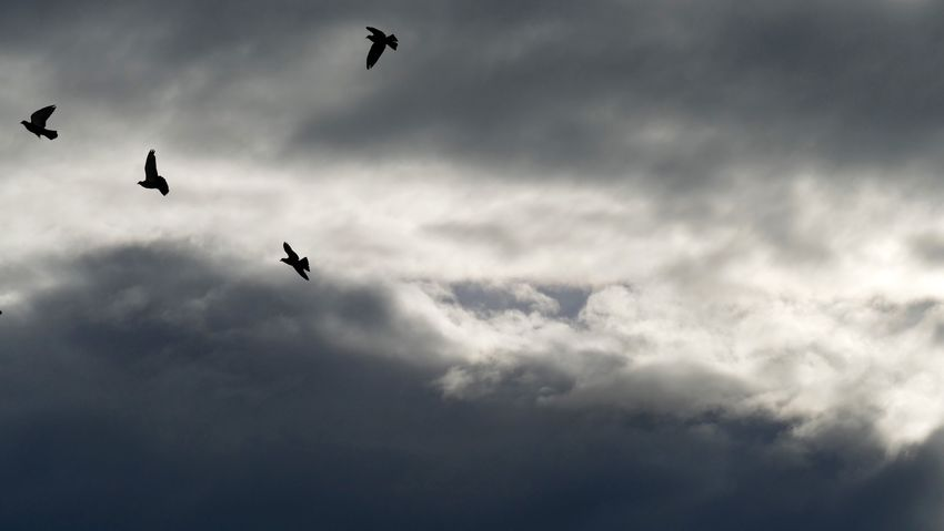 Photooftheday Clouds And Sky Birds Popular Photos