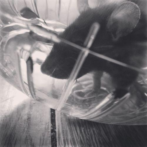 Oogieboogie Love Happiness Furbaby Pets Rat My Baby Feeling Good Random