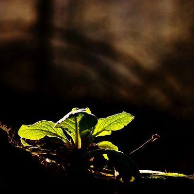 A last blast of low sun, Taken on Nikon D7000, ISO 400, f4.5. 1/320 sec Nature_sultans Naturelover_gr Igbest_shotz Igsuper_shots Super_shots Nikond7000 Flowers_shotz Lovelynatureshots Lowlight Naturallight Nature_wizards Princely_shotz