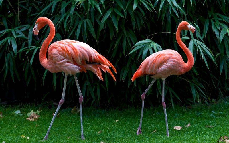 Flamingoes On Grassy Field