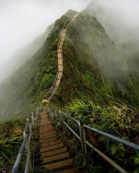 Fall in love with life, and stop trying to scratch the itch of safety and security in the illusionary reality. EyeEmNewHere #DaRealMigo Stairway To Heaven Hawaii Imjustgettingwarmedup Explorer Levels Fog Rural Scene Tree Agriculture Hill Landscape