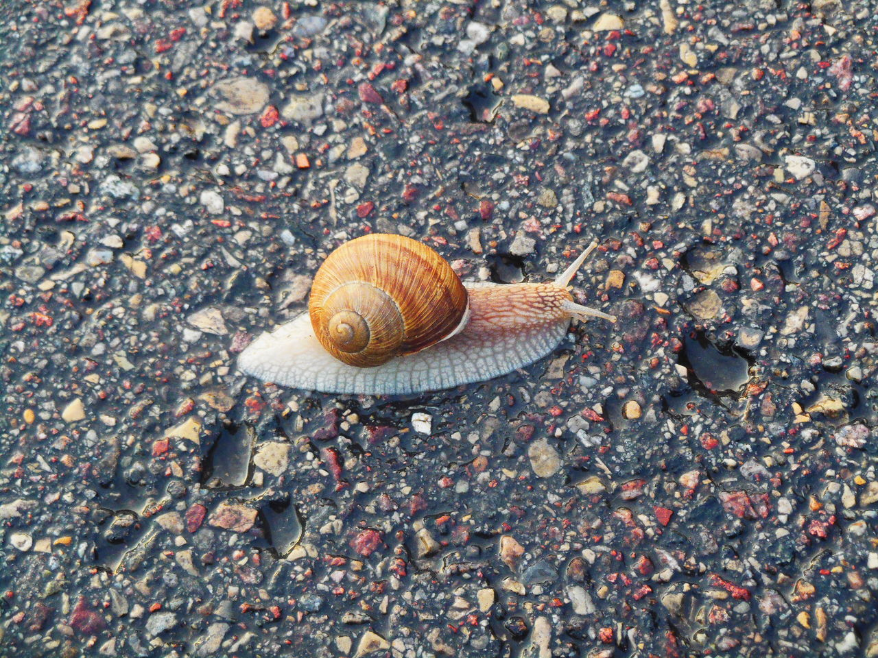 High Angle View Of Snail On Wet Road
