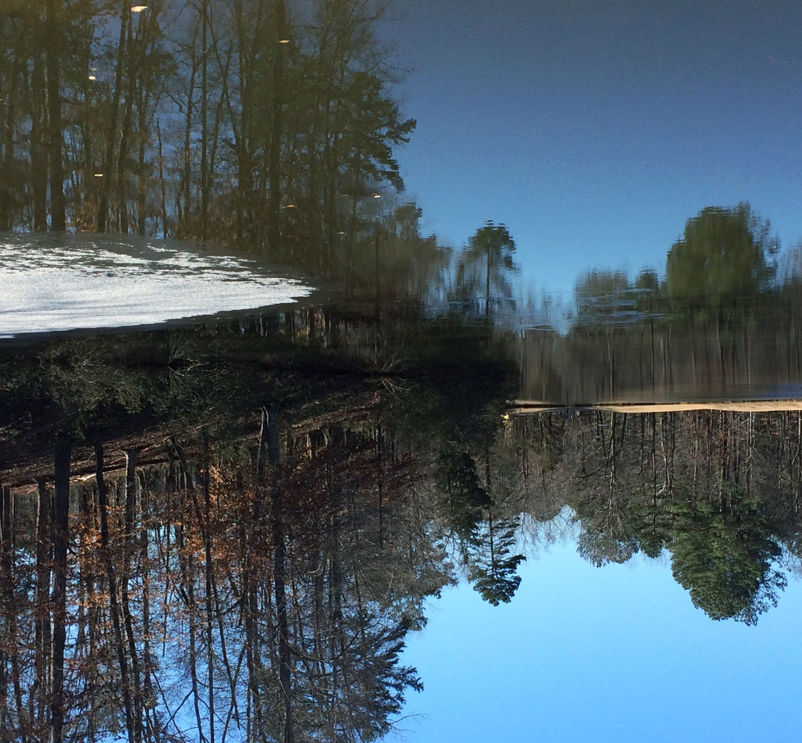 water, tree, reflection, lake, tranquility, tranquil scene, clear sky, scenics, beauty in nature, nature, winter, cold temperature, snow, waterfront, non-urban scene, day, season, standing water, forest, idyllic