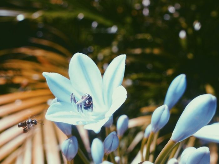 Nature Bee Bees