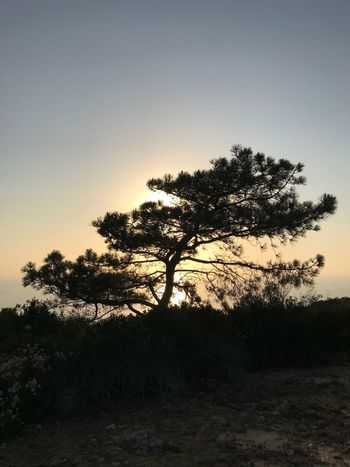 Tree Silhouette Nature Sunset Landscape Scenics Beauty In Nature Tranquil Scene Tranquility Outdoors No People Clear Sky Lone Growth Grass Sky Branch Day Torrey Pine IPhoneography IPhone7Plus Desert
