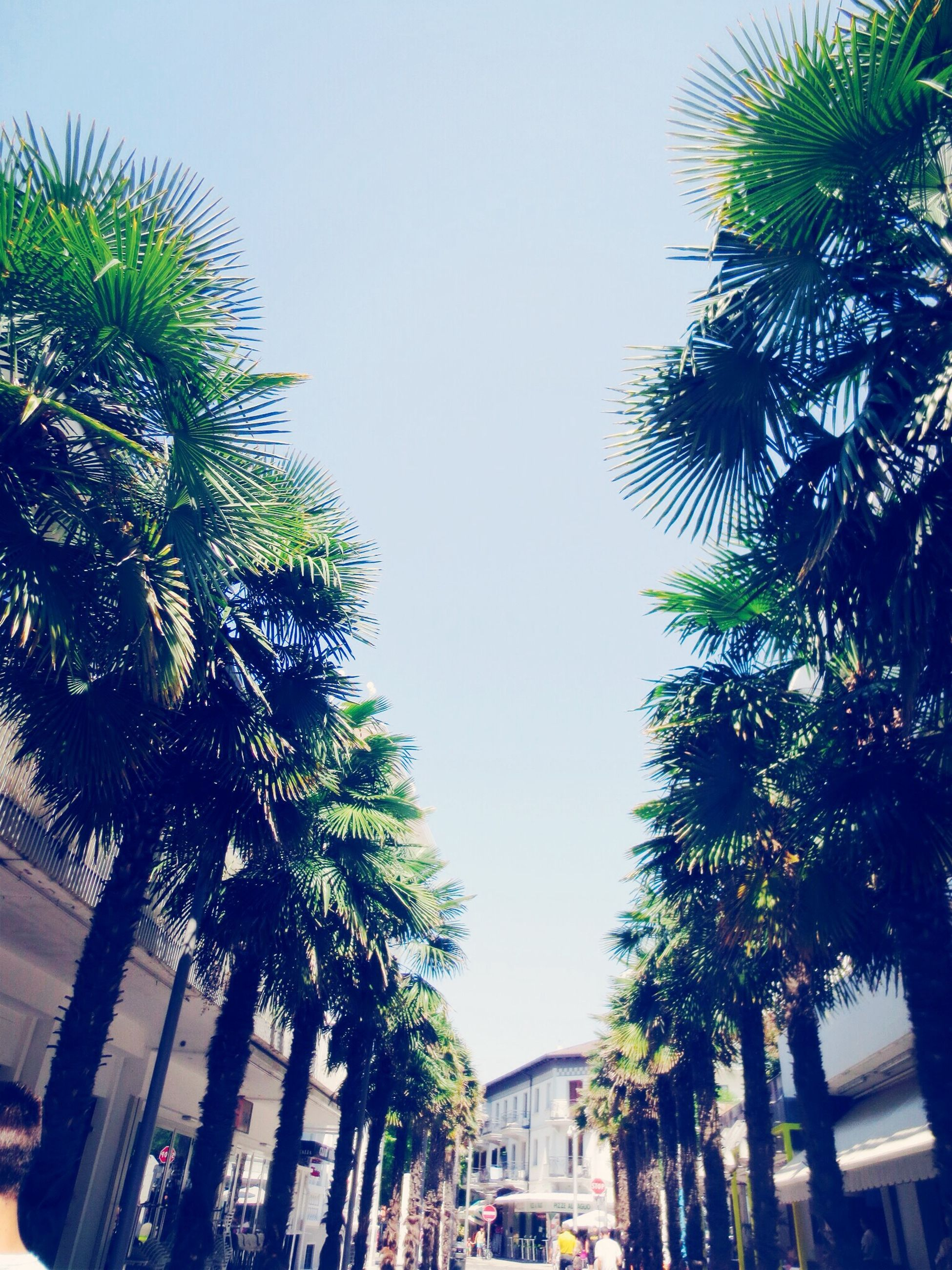 palm tree, tree, building exterior, low angle view, architecture, built structure, clear sky, growth, city, sky, coconut palm tree, tall - high, outdoors, day, residential building, building, tree trunk, branch, residential structure, no people