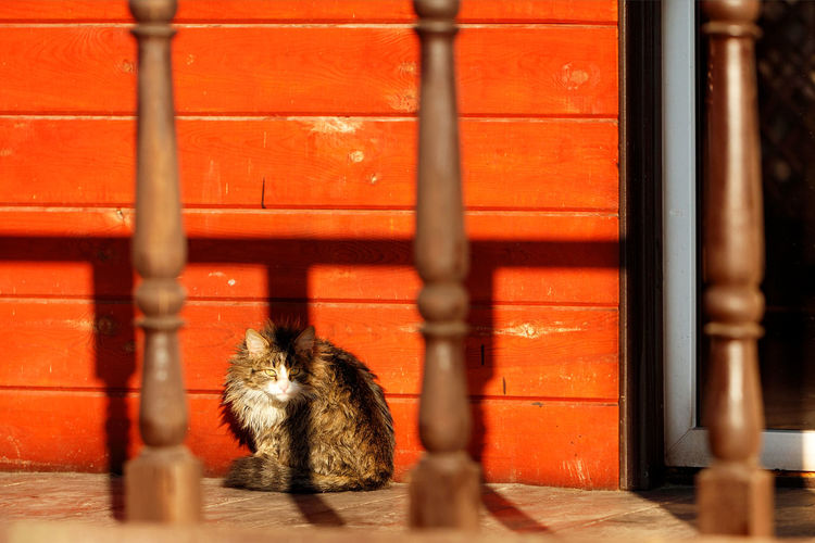 Cat sitting on a wall