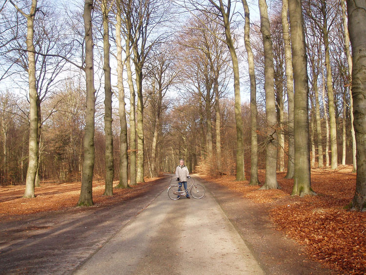 Cycling in the forest. Lage Vuursche, Netherlands. Forest Trees Bicycle Cycling Hilversum Leaves Netherlands Autumn Leaves🌿