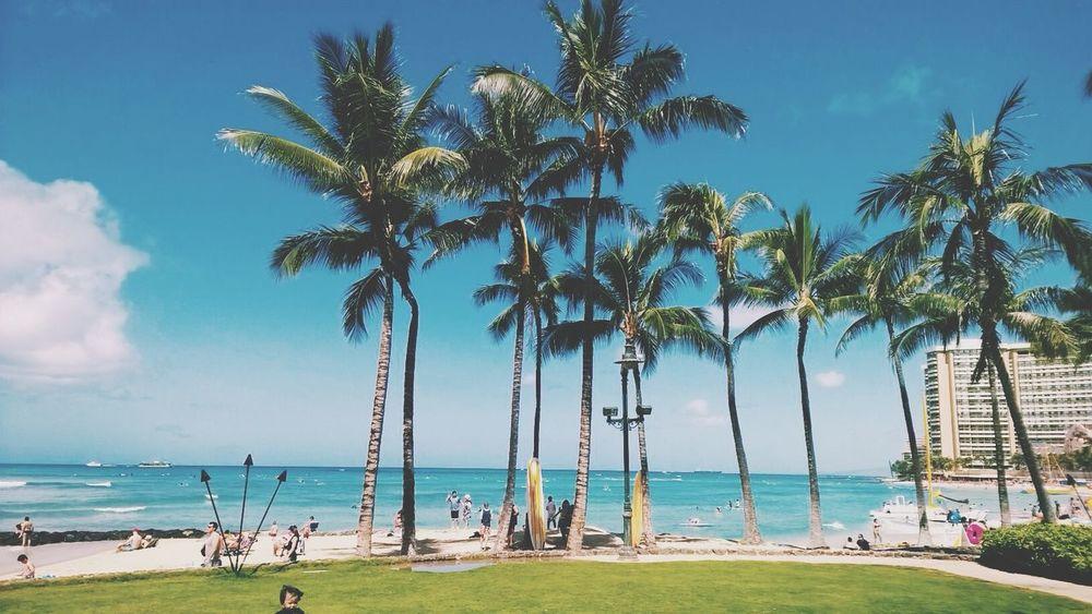 OpenEdit Hawaii Beach Sunshine