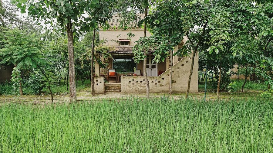 Chair Farm Farm Life Farmland Porch Rice Paddy Rural Architecture Building Building Exterior Built Structure Day Field Foliage Green Color Growth Land Lush Foliage Nature No People Outdoors Plant Rice Fields  Rural Scene Tree