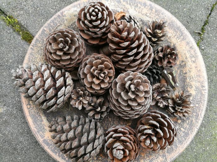 Pinecones Nature_collection Nature Colors First Eyeem Photo