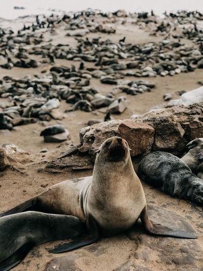 High angle view of sea lion on sand