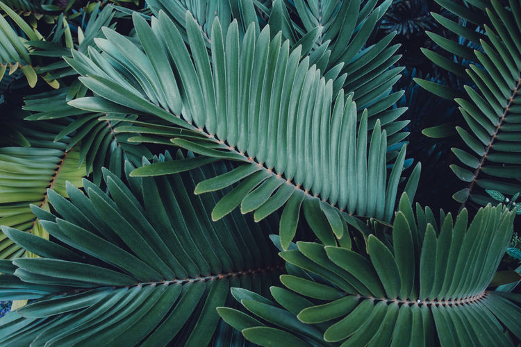 Martinique, feuillage tropical Martinique Tropical Paradise Backgrounds Beauty In Nature Botany Close-up Day Freshness Full Frame Green Color Growth Islandlife Leaf Leaves Natural Pattern Nature No People Outdoors Pattern Plant Plant Part Tranquility Tropical Tropical Climate