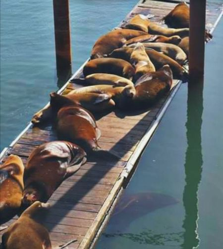 Dock Newport Oregon Wildlife & Nature Barking Seals Water Dogs Resting Sunning Outdoor Photography Nature Collection AquaDogs Swimming Under The Sea Sea Lion Colony's Oregon Coast Oregon Coast Water Gondola - Traditional Boat Sea Nautical Vessel Sea Lion City Close-up Aquatic Mammal Seal Seal - Animal UnderSea Aquatic Sea Life Pier Underwater