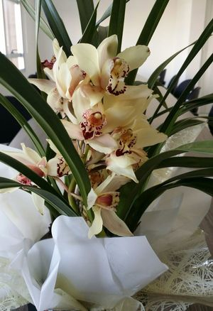 Mysurprise Gift TheDay Flowers Orchid For Me  Beautiful Beautiflowers Lovely