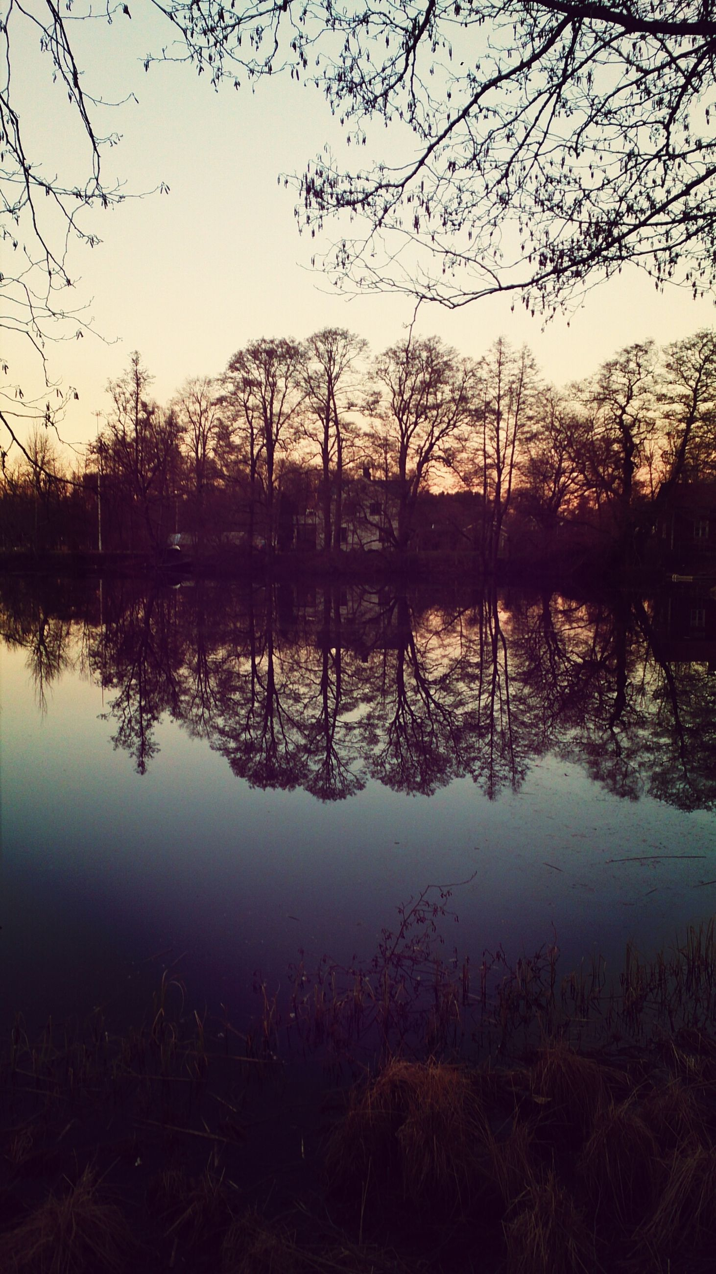 reflection, water, lake, tranquility, tranquil scene, scenics, tree, sunset, clear sky, beauty in nature, silhouette, standing water, nature, idyllic, sky, calm, lakeshore, branch, bare tree, waterfront