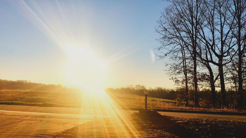 Sunrise Sunlight Sunbeam Sun Lens Flare Nature No People Bare Tree Tree Beauty In Nature Sky Scenics Tranquility Tranquil Scene Landscape The Way Forward Outdoors Day Road Sunset