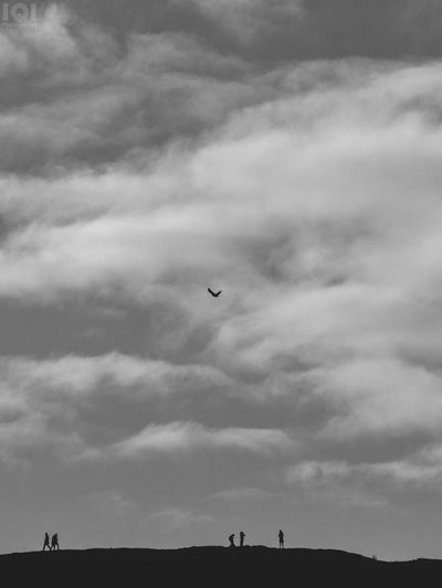 Flying Sky Cloud - Sky Mid-air Nature Bird Outdoors Hills Hill People Animal Wildlife Beauty In Nature Scotland Animals In The Wild Black & White
