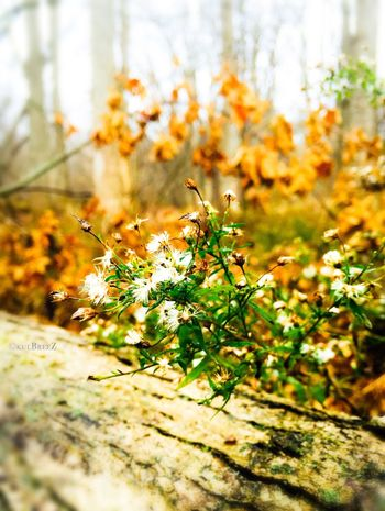 Showcase: November ..holding on🍂 StreamzooVille Flowerporn Mother Earth EyeEm Nature Lover Autumn Wildflowers Leaves My Love Life The Woods