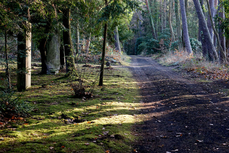 way in Stahnsdorf, Germany Tree Forest Land Plant WoodLand Nature Direction Tranquility The Way Forward Tree Trunk No People Trunk Day Beauty In Nature Growth Tranquil Scene Footpath Non-urban Scene Scenics - Nature Green Color Outdoors Trail