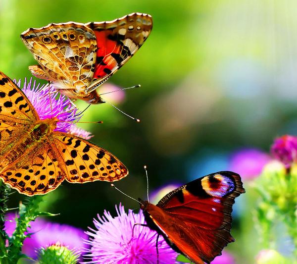 Animals Papillons In Papillion