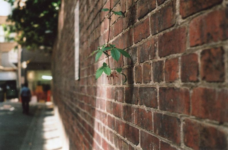 Greening the city Analogue Photography Film Photography Film Brick Wall One Animal Animal Themes Animals In The Wild Built Structure Outdoors Day Architecture Animal Wildlife Building Exterior No People Close-up Nature