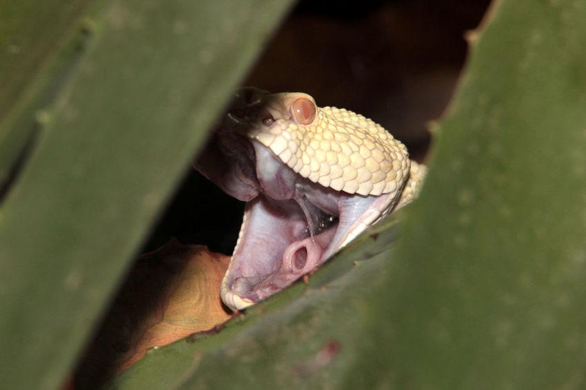One Animal Rattlesnake Reptile Snake Snake Photography Snakes Are Beautiful Terrazoo TerraZoo Rheinberg