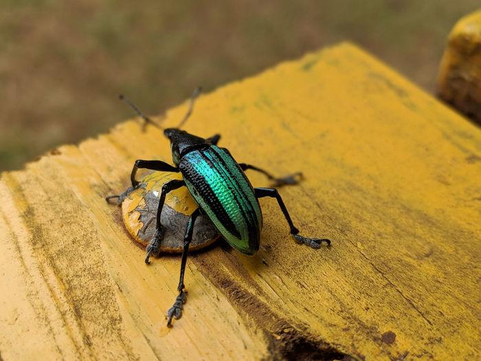 bug me Bright