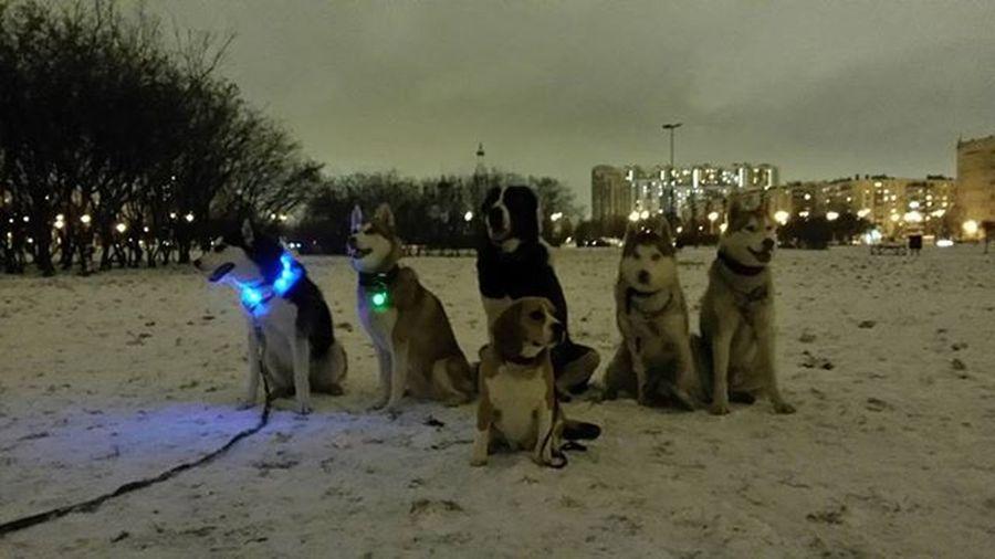 Вчера прекрасно погуляли вечером)) Axel Фрейр Бая Уна Женева Рокет безфильтров
