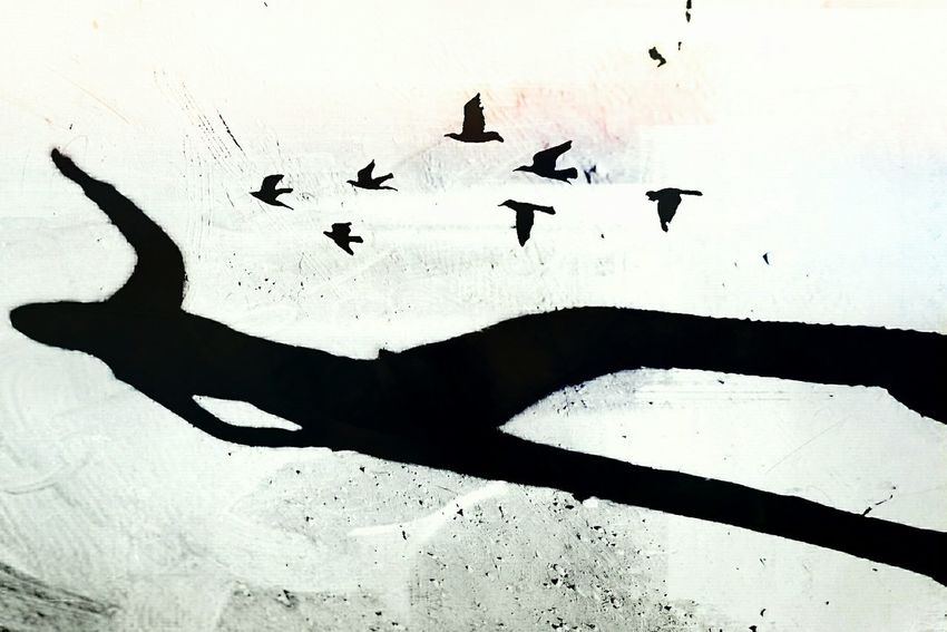 Fly away my little birds ShadowsSilhouettes Shadows & Lights Light-Play Wall Shadow Black & White Black And White Beauty Of Decay