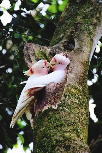 Lovebirds Sweet Photography Nature Taking Photos The Way I Feel Lizara ❤️