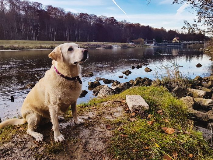 View of dog standing on rock by lake