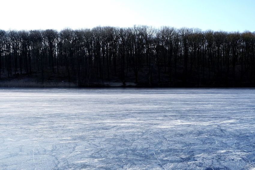 Frost Frozen Lake Cold Snow Covered Countryside Weather Condition Ice-skating Flat Lone White Spruce Tree Global Warming