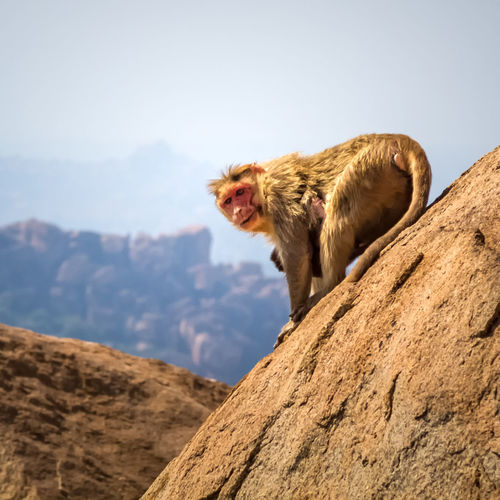 Portrait Of Monkey On Rock Against Sky