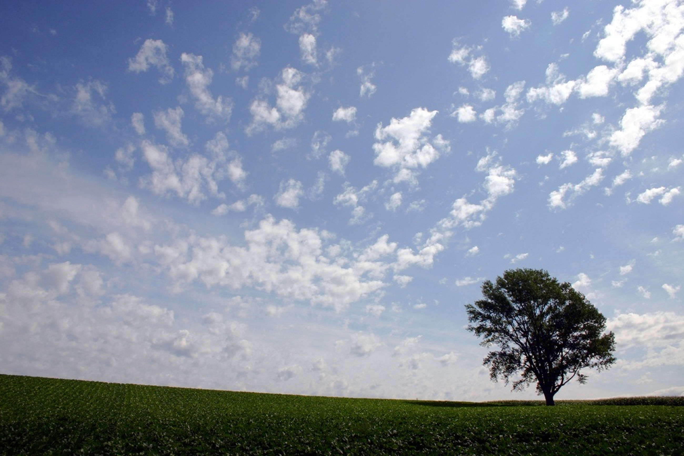 field, landscape, tranquil scene, tranquility, sky, beauty in nature, scenics, tree, nature, growth, agriculture, rural scene, cloud - sky, grass, cloud, farm, idyllic, horizon over land, green color, day