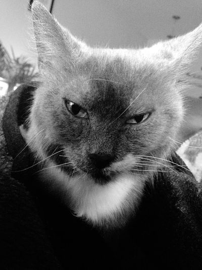 What's that famous saying about woman with this look ...oh yeah lol (( Dagger eye's )) .Lmao makes me wonder what kinda day did my sweet little Nubby cat have 😳😂😂 she's a trooper 😍😍❤️❤️ Manx Cat Attitude Love Her To Bits My Little Rain Cloud ❤️ Wouldnt Change Her For Anything My Baby Angel