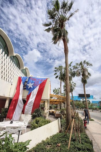 Together as one Palm Tree Cloud - Sky Tree Sky Day Outdoors No People Low Angle View Building Exterior Hurricane Maria San Juan PR San Juan