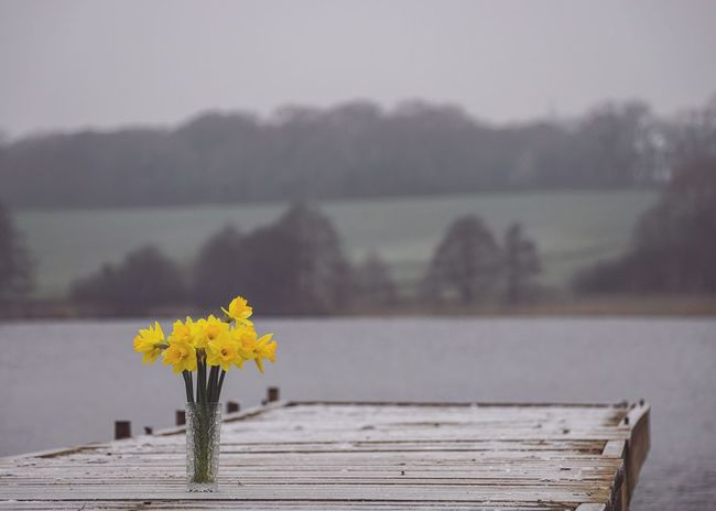 Daffodils Vase Vase Of Flowers Vase Of Daffodils Jetty Pier Wooden Lake Flower Fragility Beauty In Nature Nature Yellow Focus On Foreground Freshness No People Outdoors Day Flower Head Close-up Sky Colour Pop Paint The Town Yellow