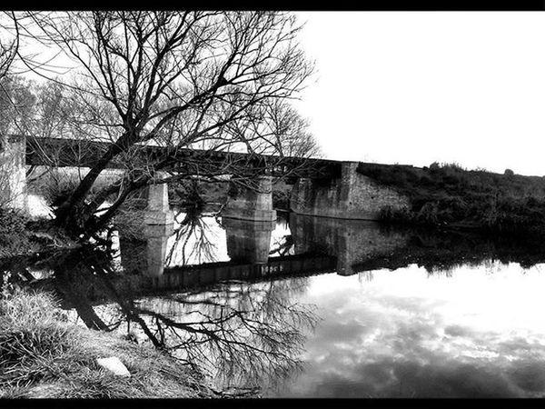 Ciudaddeazul Arroyo Arroyodeazul Argentina Argentine Ataderdecer Vias Puente Puentes Vía Rastasmgph árbol Arboles Arboles Buenosaires