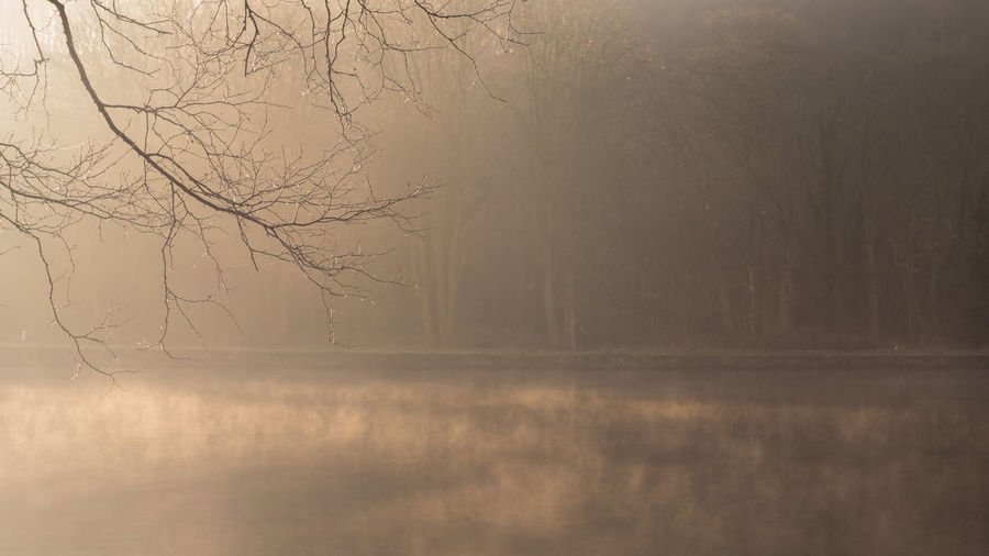 Fog Tree Bare Tree Tranquility Nature Water No People Scenics - Nature Landscape Plant Environment Beauty In Nature Branch Reflection Land Cold Temperature Tranquil Scene Winter Outdoors Textured Effect
