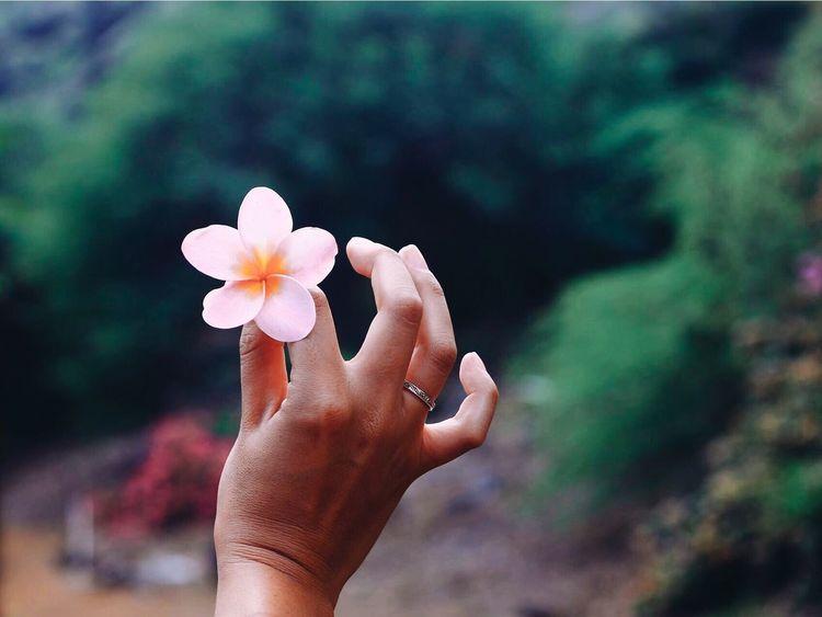 Hawaii Flower Oahu Botanical Gardens Nature Beauty In Nature 808  Human Hand 808state Surfgirl EyeEmNewHere