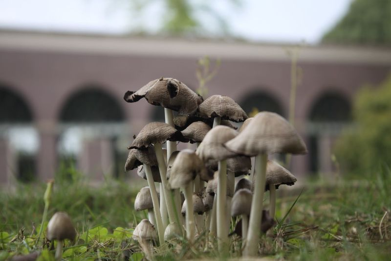 Close-up of mushrooms growing on grassy field