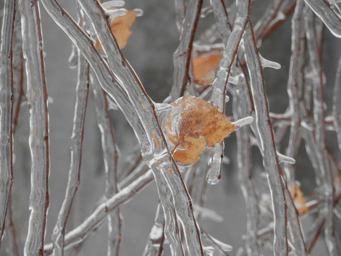Close-up of frozen twig