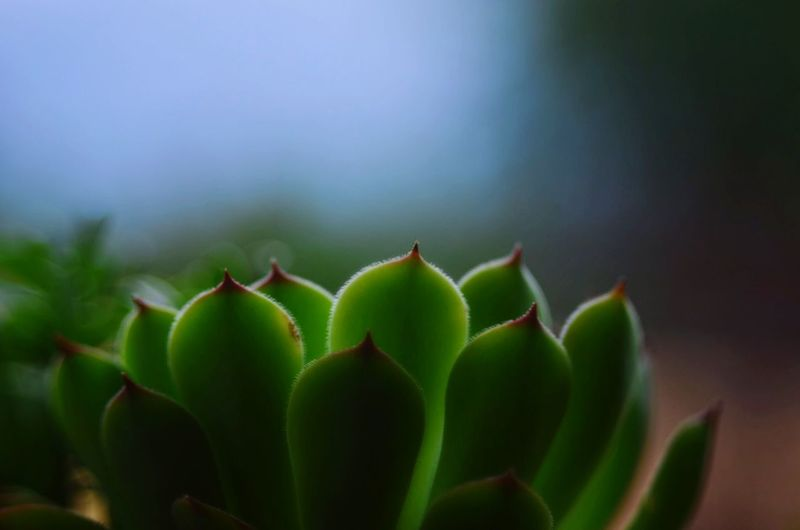 Old Lenses Takumar Argentina Mendoza Growth Green Color Plant Nature Beauty In Nature No People Close-up Cactus Freshness