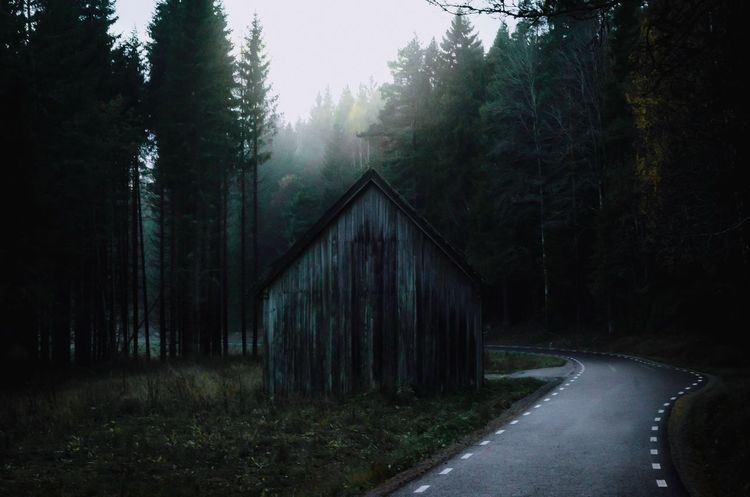 House that we all forgotten Tree Forest Nature No People Outdoors Day Road Sky Scary Sweden Creepy House The Way Forward Asphalt Built Structure Cloud - Sky Misty Fog Fog_collection Atmospheric Mood EyeEm Nature Lover EyeEmBestPics EyeEm Best Edits EyeEm Best Shots - Nature Eyem Gallery Landscape_Collection