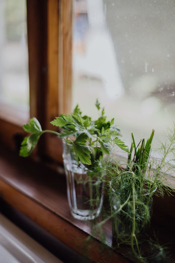 Close-up of herbs in glasses on window sill
